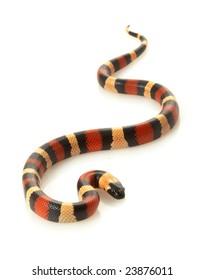 Imágenes, fotos de stock y vectores sobre Colorful Snakes