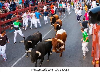 SAN SEBASTIAN DE LOS REYES, SPAIN - AUGUST 29: Encierro - Running of the Bulls in August 29, 2013 in San Sebastian de los Reyes, Spain. Traditional running people with the bulls