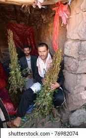 SANAA, MARCH 14: Two unidentified dealers of  Khat (Catha Edulis) shown on March 14, 2010 in Sanaa, Yemen.  Khat contains an amphetamine alkaloid stimulant narcotic illegal in most countries.