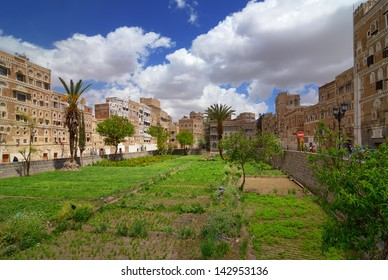 SANAA, YEMEN - MAR 6: Vegetable garden among traditional architecture on Mar 6, 2010 in Sanaa, Yemen. Inhabited for more than 2.500 years, the Old City of Sanaa is a UNESCO World Heritage City