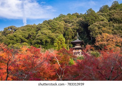 Sanctuary among the green and red colorful leaves with bright blue sky as background.