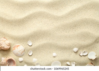 Sand background with shells. Beach texture. Copy space. Top view