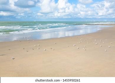 Sand beach and Atlantic ocean in Blankenberge, Flanders, Belgium