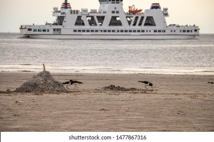 sand beach with birds and ferry in norderney, travel island Wattenmeer germany