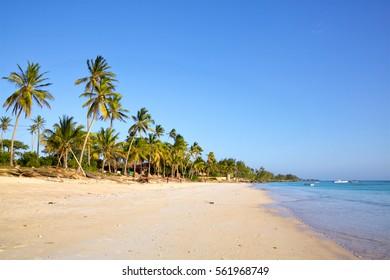 Sand beach with palm trees, Kizimkazi, Zanzibar, Tanzania