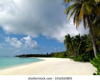 Sand beach with palm trees Maldives