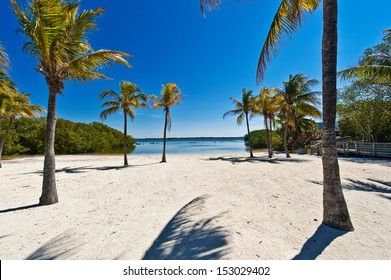 sand beach under palm trees - Florida Keys
