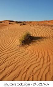 Sand desert landscape pattern with bush