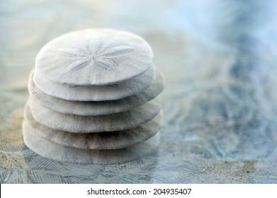 Sand Dollar animal sea shell in a circular shape.
