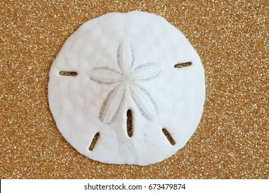 Sand Dollar on Glitter