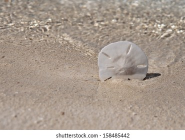 Sand dollar propped up on beach with ocean water waves in background.  copy space available