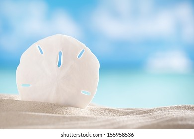 sand dollar shell on beach and sea and boat background, shallow dof