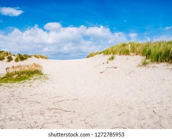 Sand dune with marram grass in nature reserve Het Oerd on West Frisian island Ameland, Friesland, Netherlands