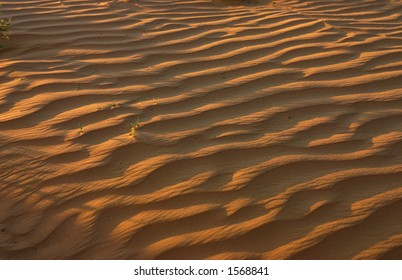 Sand dune in the Negev, Israel.