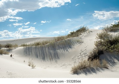 sand dune, shifting sands and plants