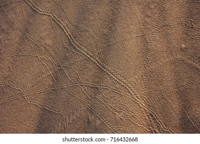 Snake Tracks Images, Stock Photos & Vectors | Shutterstock