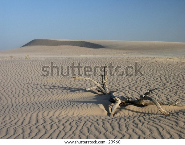 Sand dune with tree root.