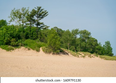 Sand Dune and Trees at Indiana Dunes National Park on the Greet Lakes