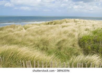 Sand dunes along the Belgian coast