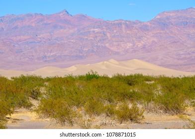 Sand Dunes, Death Valley National Park, California, USA
