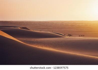 Sand dunes in desert landscape at sunset. Wahiba Sands, Sultanate of Oman.
