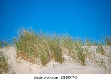 The sand dunes or dyke at Dutch north sea coast with european marram grass (beach grass) under blue clear sky in summer, Netherlands.