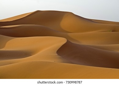 The sand dunes of Erg Chebbi near Merzouga are among the highest and most beautiful in the Moroccan Sahara. Sahara, Morocco.