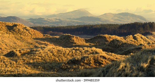 Sand dunes flanked by forest, in early morning light just after sunrise, with some of the hills of Snowdonia in the background.