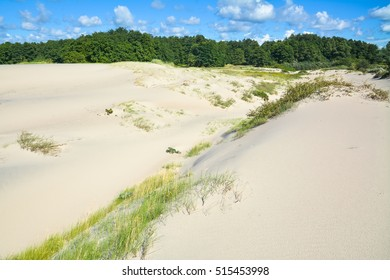Sand dunes and forest in the background.