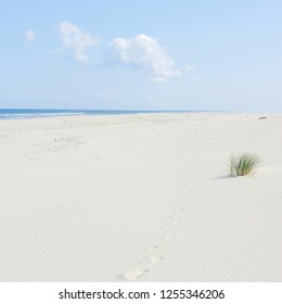 Sand dunes with dunes grass on the North Sea