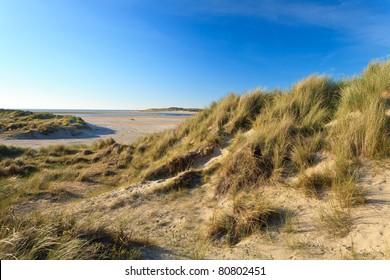 Sand dunes with helmet grass near the sea