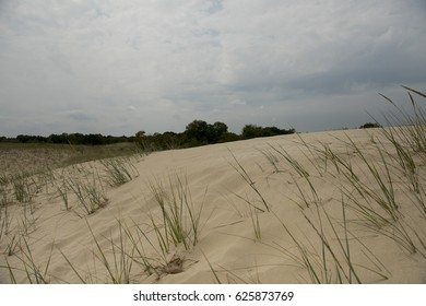 Sand dunes in Letea forest , in the Danube Delta area, Romania, in a summer day