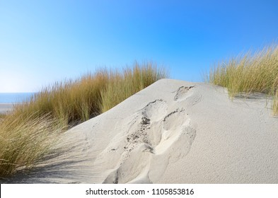 sand dunes with marram grass