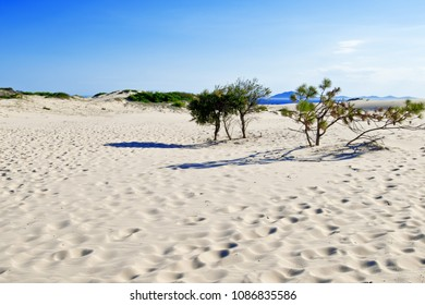 Sand dunes in Myall Lakes in Australia.