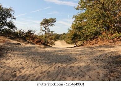 Sand dunes in North Brabant in Holland
