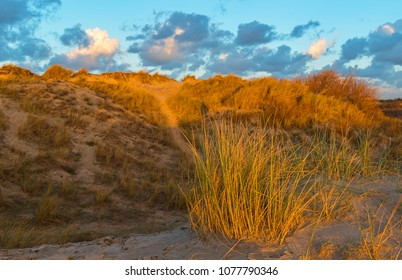 The sand dunes of Ostend city at sunset with dune grass illuminated by sunlight, West Flanders, Belgium, Europe.