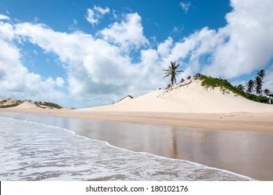 Sand dunes with palms, Pititinga, Natal (Brazil)