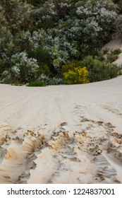 Sand dunes sloping down to vegetation at the Big Drift in Wilsons Promontory national park, Victoria, Australia