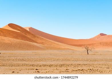 Sand dunes at Sossusvlei in the Namib desert, Namibia