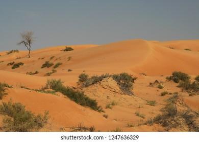 sand dunes with spare vegetation in Oman desert