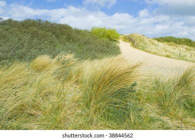 Sand duns along the Belgian coast