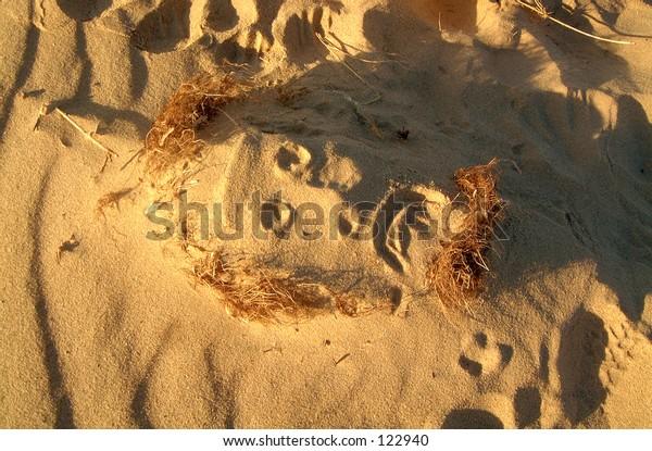 Sand face beach shore grass hair beard eyes nose mouth sad sea sun shadow light