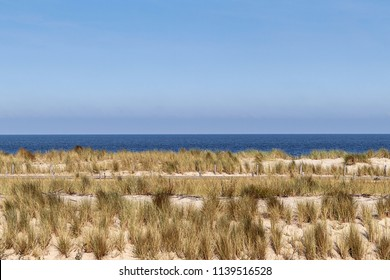 Sand and marram in the dunes on the Dutch coast in summer during a long, dry, hot period.