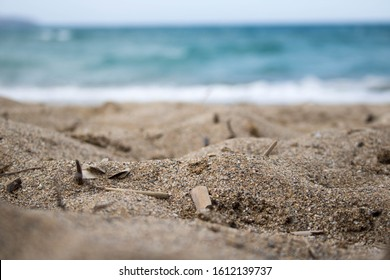 Sand and Misc Debris on the Beach