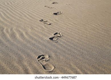 the sand on the beach