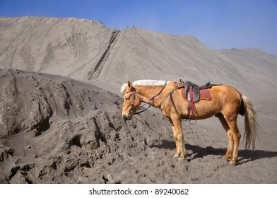 Sand pattern of volcano Mountain Bromo with horse, indonesia