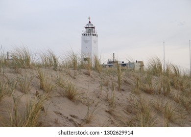 Sand reed at the dunes of Noordwijk in the Netherlands at the North Sea coast with the white lighthouse on the background.