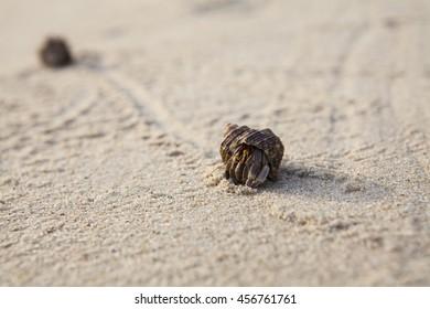 Sand Scene Exotic Creature.hermit crab.Beach Phuket Thailand.