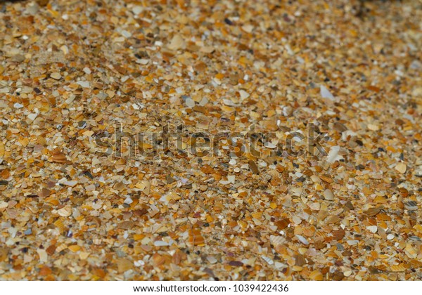 Sand and seashells background