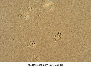 Sand texture background at the seaside with puppy dog paw prints